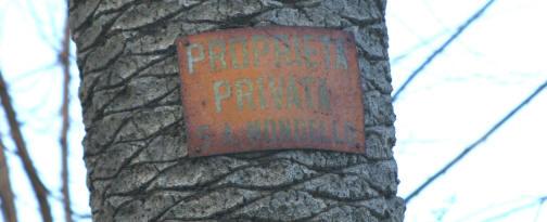 """Le scritte """"Proprietà Privata Soc. Mondello"""" sulle palme a   Piazza Valdesi -"""